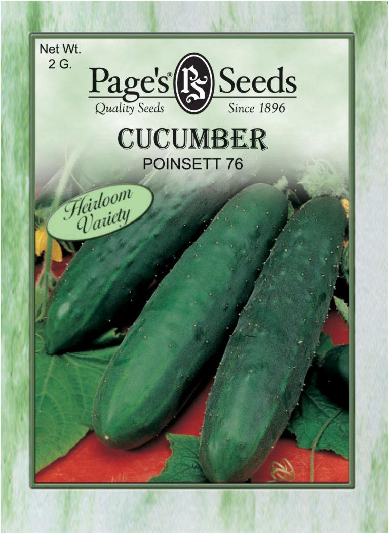 Petite cucumber seed, sex pussy iranian