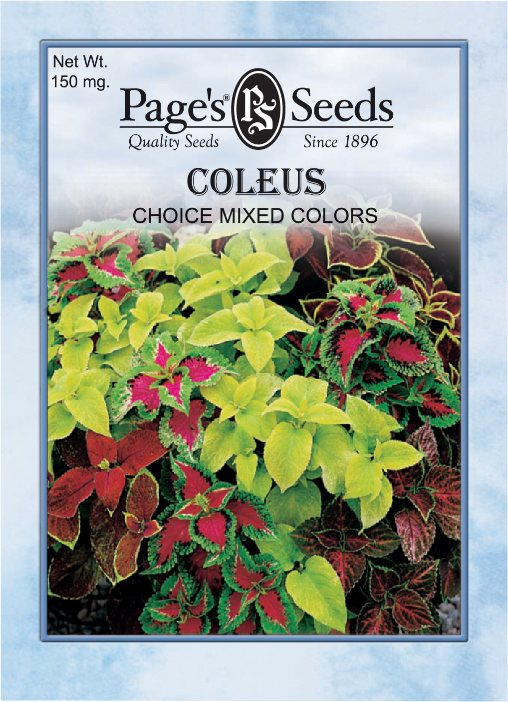 Coleus Choice Mixed Colors The Page Seed Company Inc